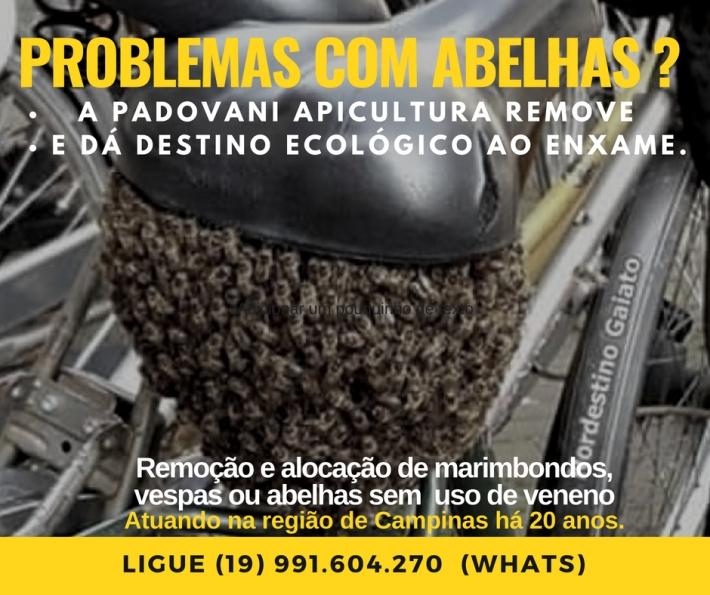 Padovani apicultuira